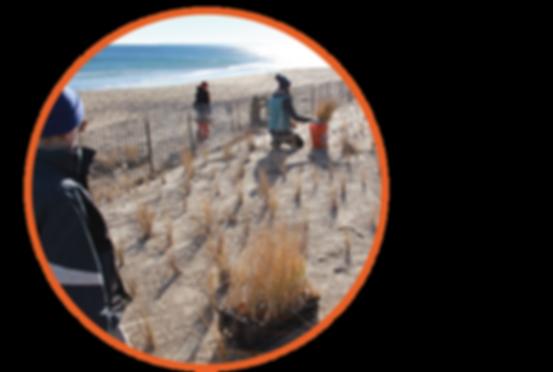 Beach Dune Restoration