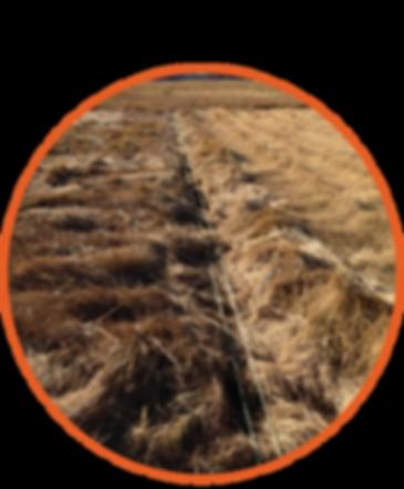Marsh Drainage Restoration