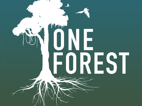 Presenting: One Forest