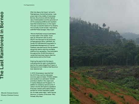 The Last Rainforest In Borneo
