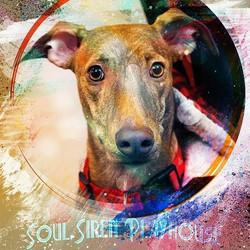 Soul Siren is Friendship