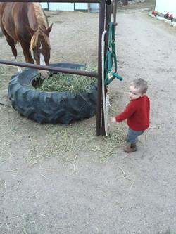 Ransom feeding horses