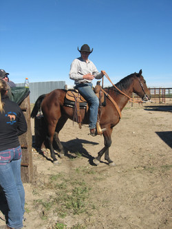 NJC Ranch Horse