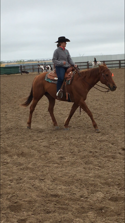 Youth Ranch Horse
