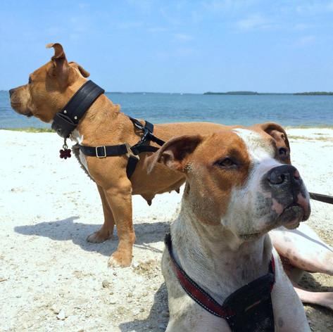 Gulfside City Park Beach: Sanibel, Florida