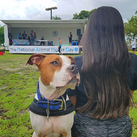 National Animal Rights Day: Coconut Grove, Florida
