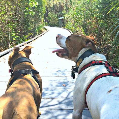 J.N. Ding Darling Wildlife Refuge: Sanibel, Florida
