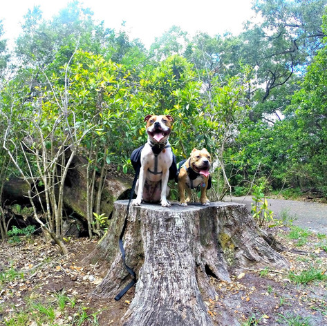 Tree Tops Park: Davie, Florida