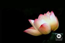 Zen Series #5