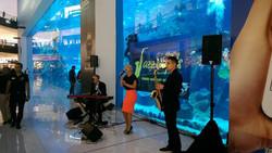 Live music events, Dubai, trio
