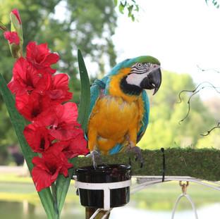 Luau Parrot 2.jpg