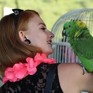 Luau Parrot.jpg