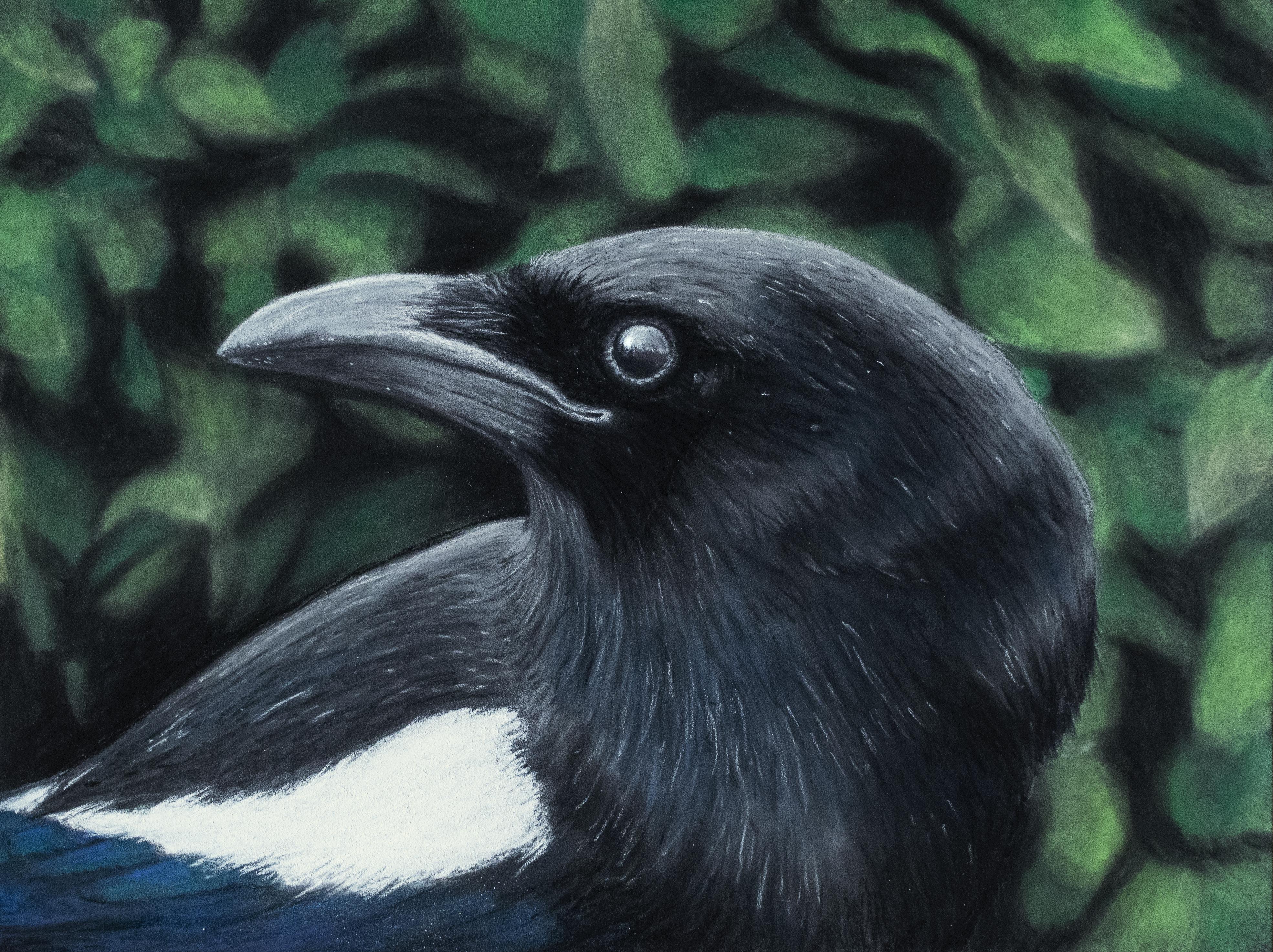 Magpie # 2 illustration