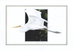 Great Egret illustration