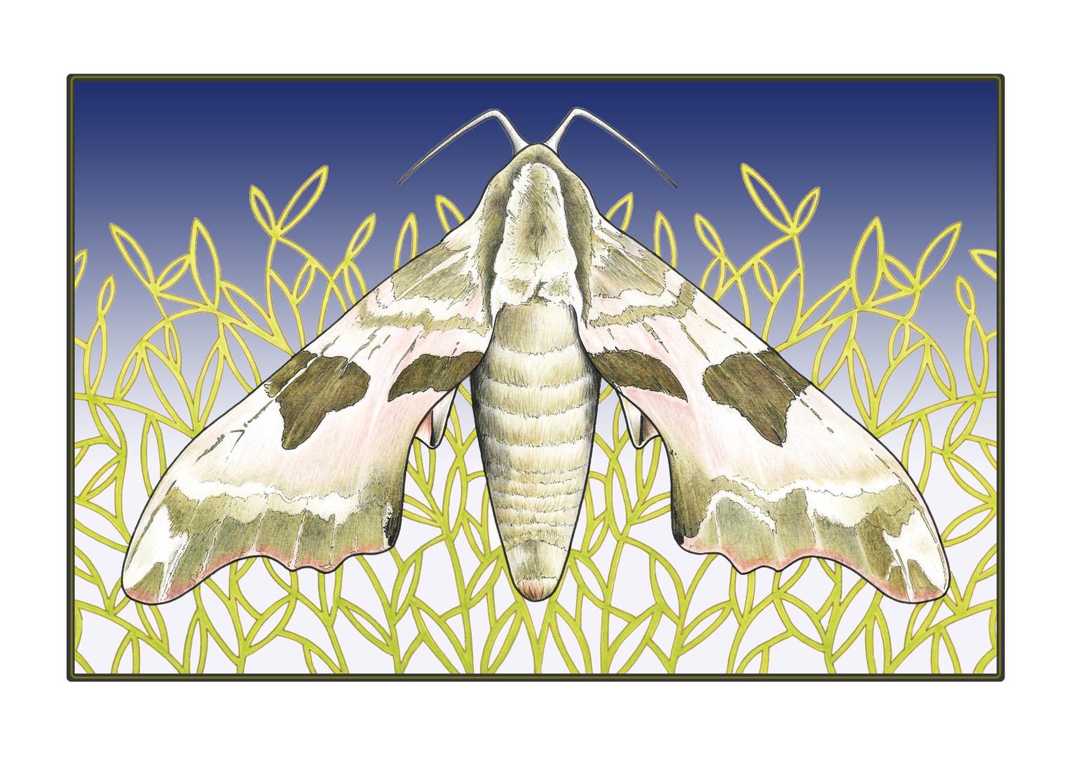 Art Deco # 7 'Moth' illustration