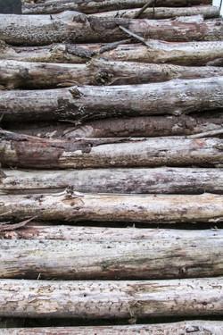 Timber # 1