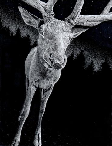 Midnight Deer illustration