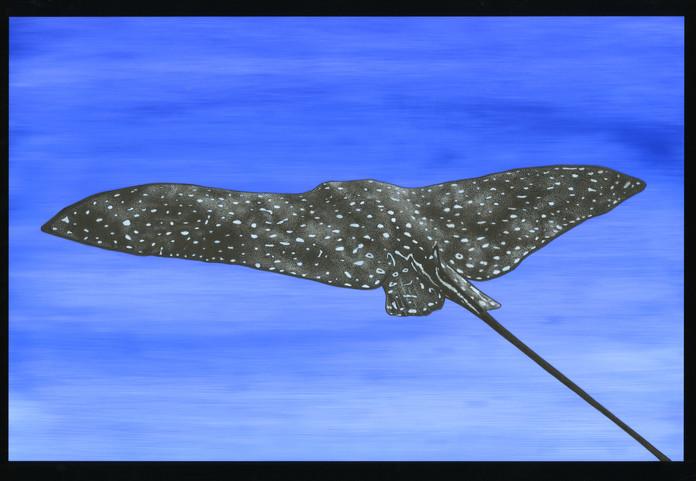 Stingray illustration