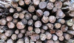 Timber # 2