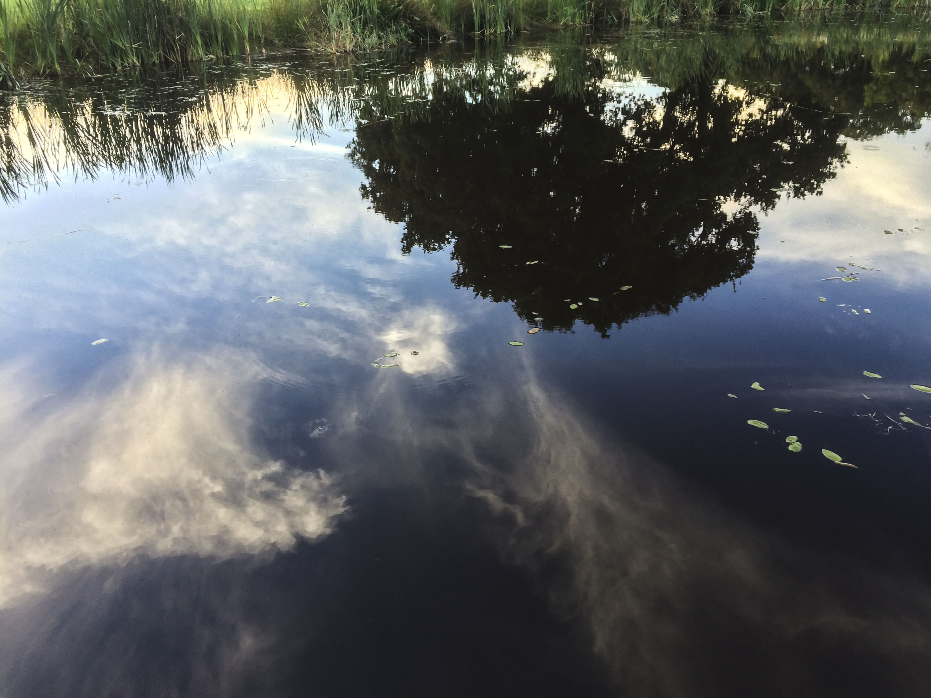 Reflections # 1