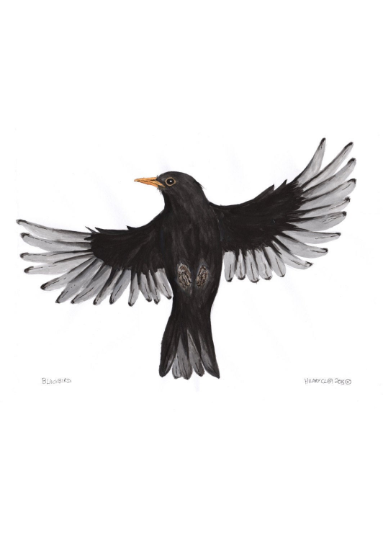 Blackbird Greetings Card