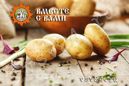 """Картофель """"Молодой"""" (мытый)"""