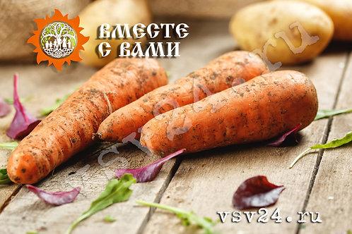 Морковь немытая