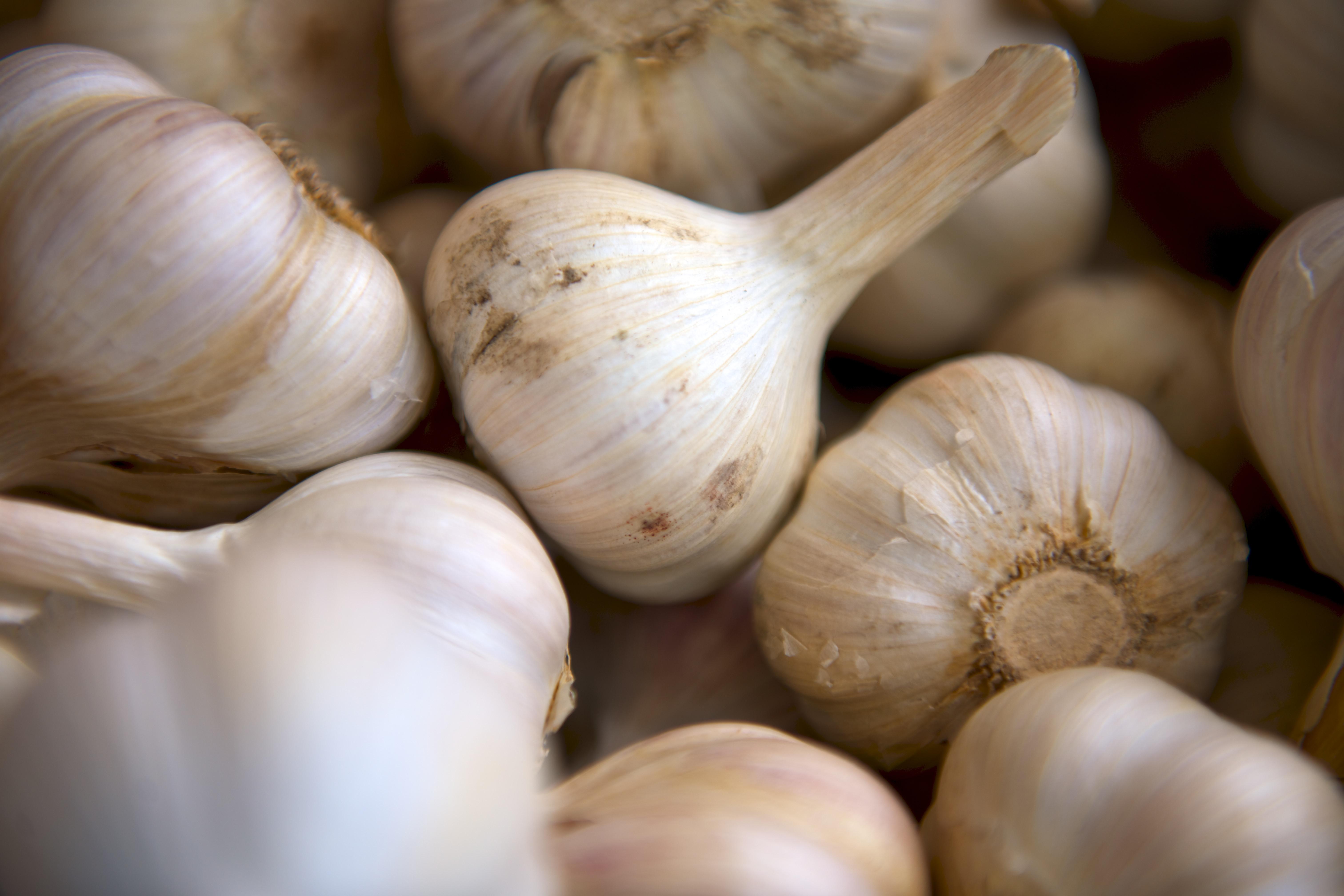 Gourmet Garlics