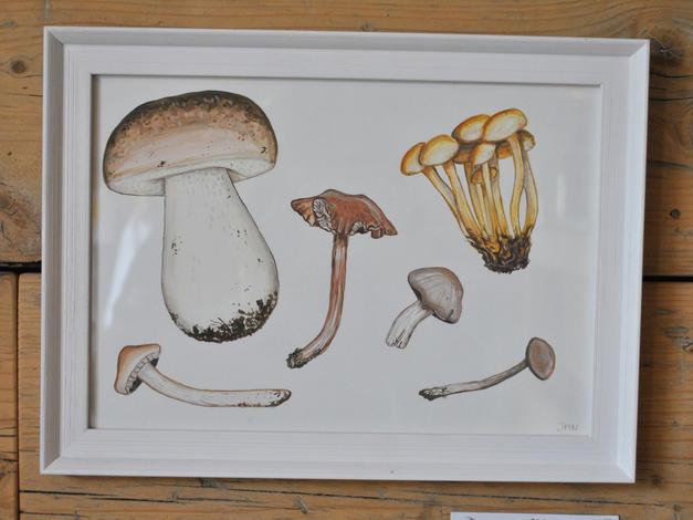 Wild Mushrooms, Original Gouache Painting £60