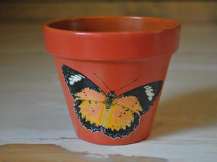 Orange Lacewing Hand Painted Pot £10