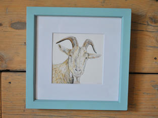 Alpine Goat, Original Gouache Painting £45
