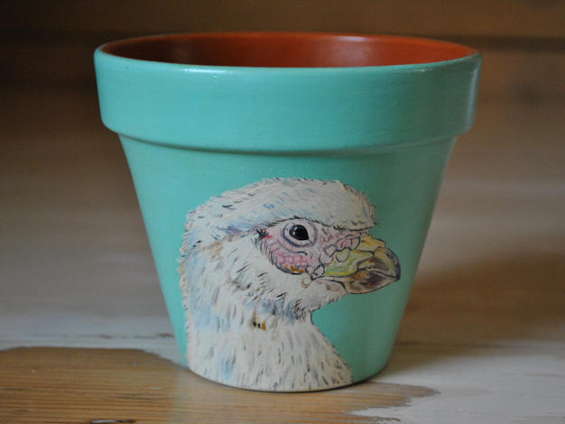 Sheathbill Hand Painted Pot £10