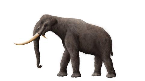 Mammoth (Hairless)