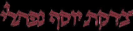 TYN לוגו 1.png