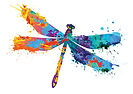 EDUCARE_Logo_Dragonfly.jpg