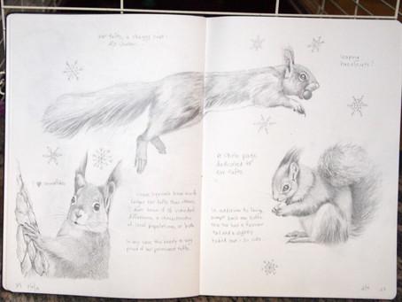 Squirrels in my Sketchbook