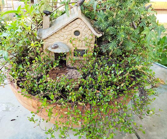 centerpiece garden.jpg