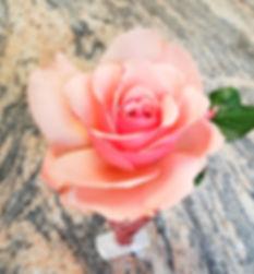 last perfect rose.jpg