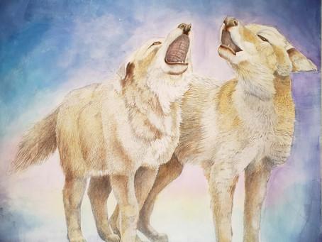 Hearing Coyotes Again