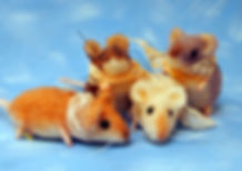 needle felted wool mice with vintage lace