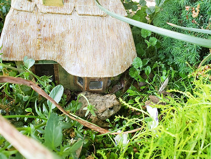 toad in the garden small.jpg