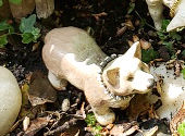 kindly shepherdess dog.jpg
