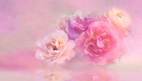 flower-3054806_1920.jpg