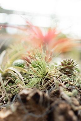 succulents2-5.jpg