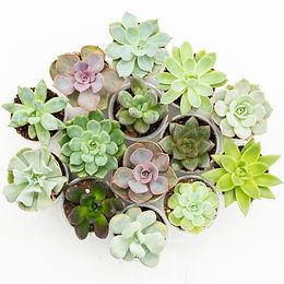 succulents2-44.jpg