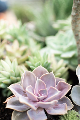 succulents2-7.jpg