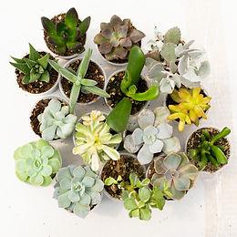 succulents.ca-112.jpg