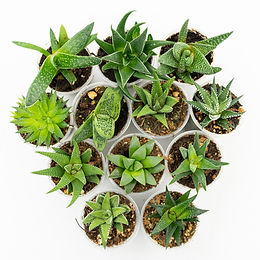 succulents2-43.jpg