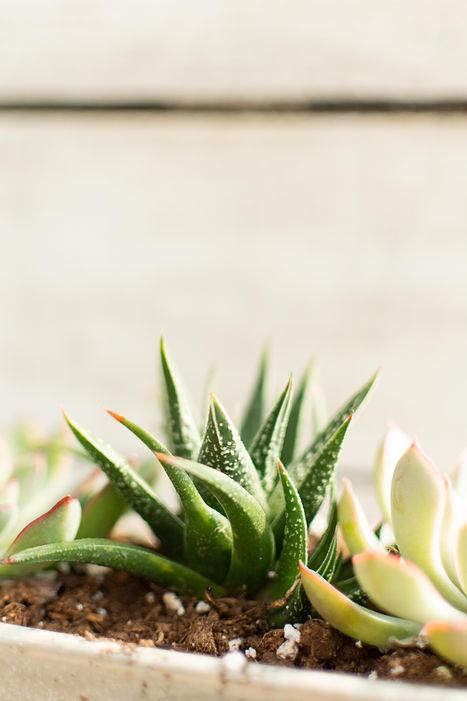 succulents2-10.jpg