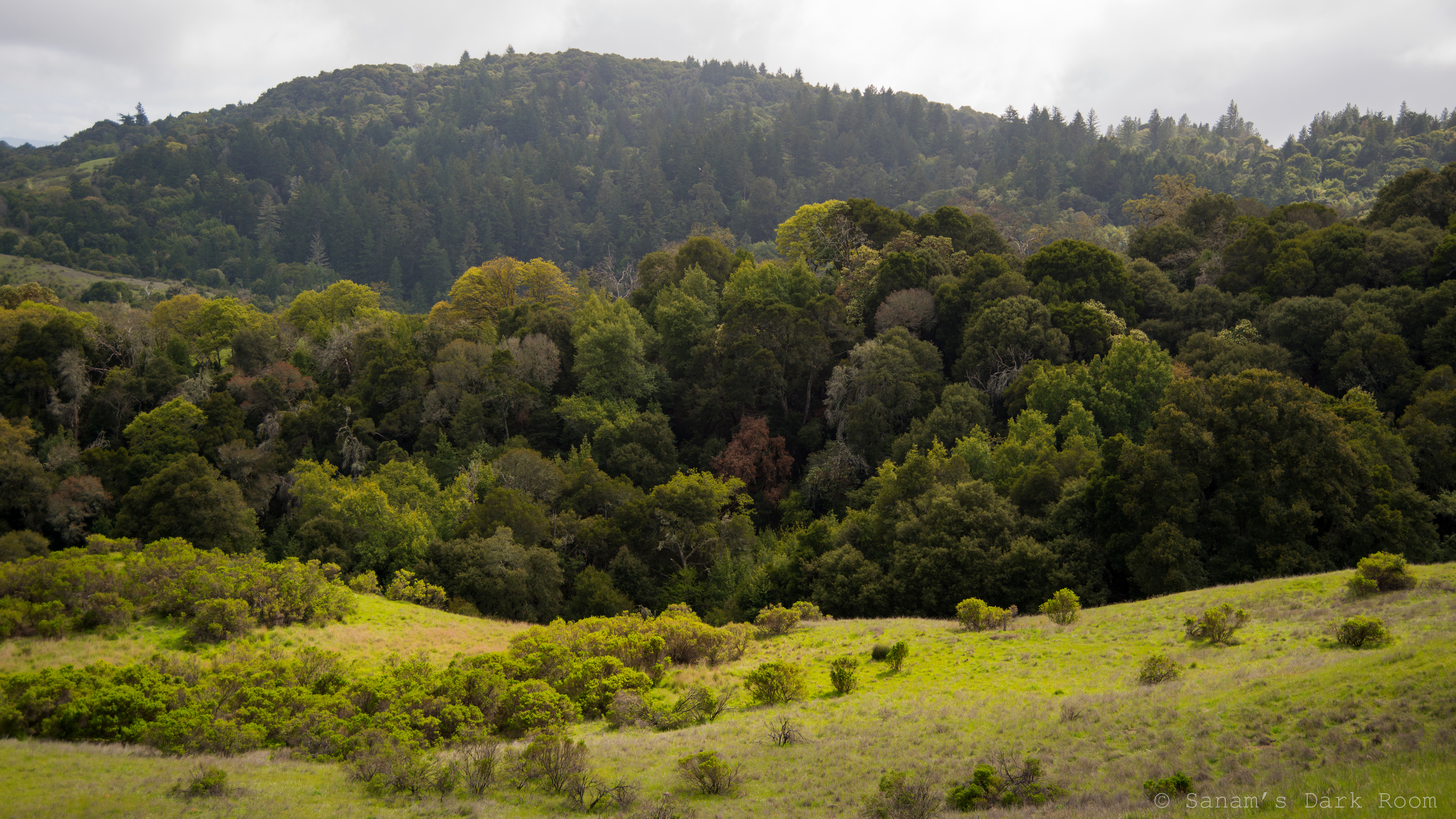 Monte Bello, Los Altos Hills